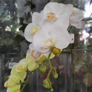 סחלב פלנופסיס מלאכותי משי