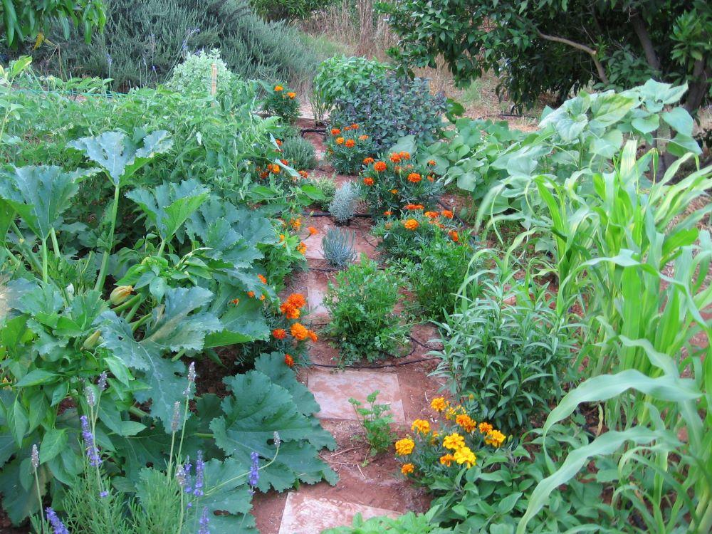 גן ירק טבעי