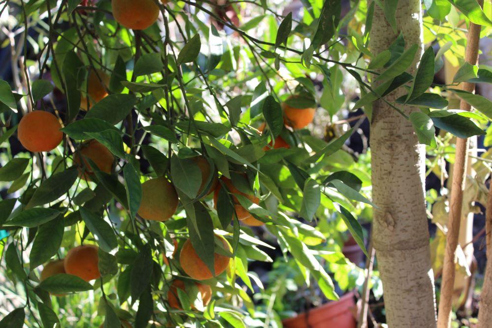 משמרים ומעשירים את טעם הפירות והתבלינים בגן
