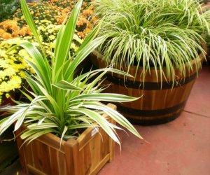 גידול צמחים במיכלים