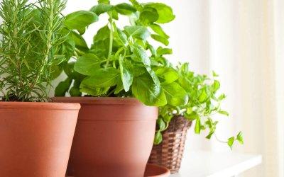 קטלוג צמחים